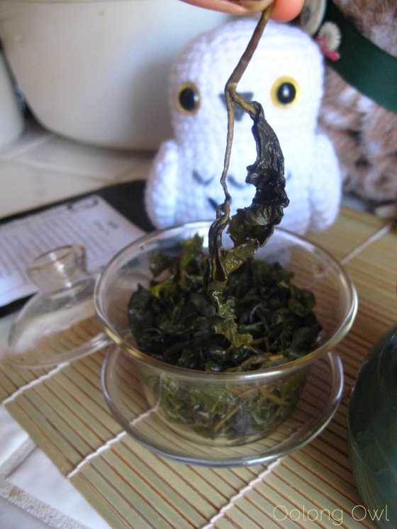 Milk Oolong from Mandala Tea - Oolong Owl Tea Review (14)
